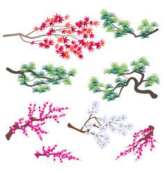 Japanese maple korean pine and blooming tree vector