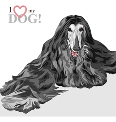 domestic dog black Afghan Hound breed vector image vector image