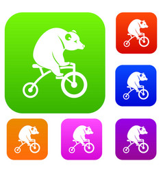 Bear on a bike set collection vector