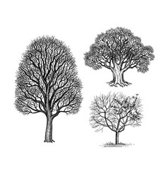 ink sketches winter trees vector image