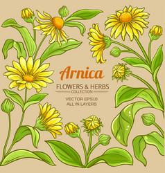 Arnica plant frame on color background vector