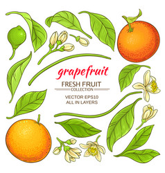 grapefruit elements set vector image