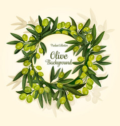 Olives branch for extra virgin olive oil vector