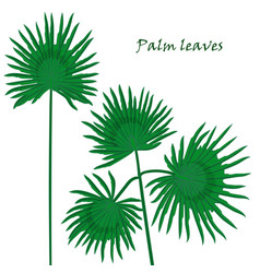 set tropical palm leaves realistic drawing in vector image