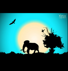 Sunrise in the jungle with old tree birds and vector