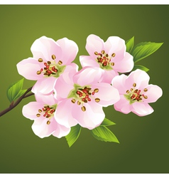 Blossoming sakura japanese cherry tree vector image