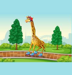 giraffe playing roller skate in park vector image
