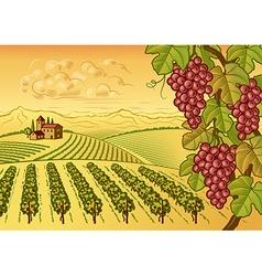 Vineyard valley landscape vector image