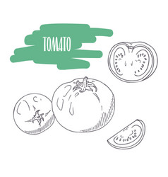 hand drawn tomato isolated on white vector image