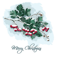 card with hawthorn branch vector image