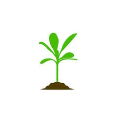 Growing plant biology seed logo design vector
