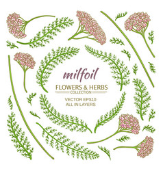 milfoil elements set vector image