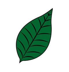 Nature leave foliage botanical image vector