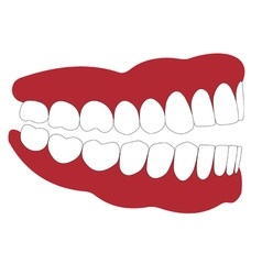 open mouth is not closed teeth vector image vector image