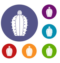 Blooming cactus icons set vector