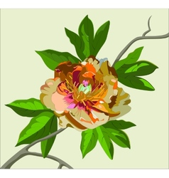 peony flower on a branch vector image