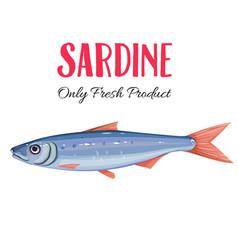 sardine vector image