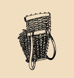 grape basket vintage drawing vector image