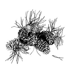 branch of pine with cone hand drawn image vector image