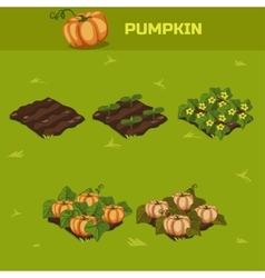 SET 5 Isometric Stage of growth Pumpkin vector