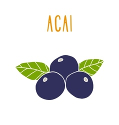 Acai berries vector image