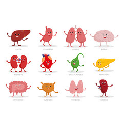 cute human organs cartoon characters vector image