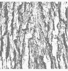 Grunge wood texture bark tree vector