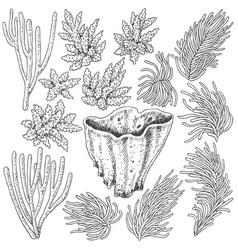 sketch corals set vector image
