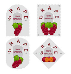 the grape vector image