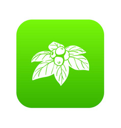Whortleberries icon green vector