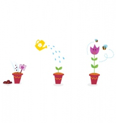 garden flowers growth stages tulip vector image vector image
