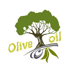 olive oil bottle and product label templates vector image