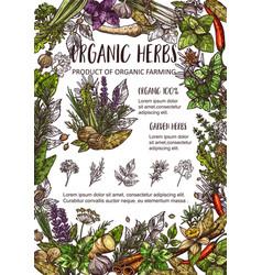 Organic farm spices garden herbs and seasonings vector