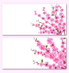 Sakura - two cards decorative flowers of cherry vector
