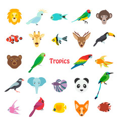 tropical birds animals and vector image