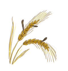 Claviceps purpurea ergot or ergot fung vector