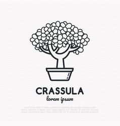 crassula plant thin line icon vector image