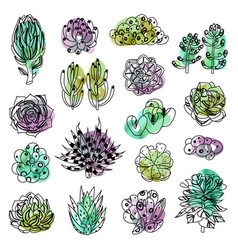 isolated colored succulents vector image
