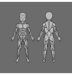 Anatomy of children muscular system exercise and vector image