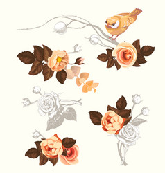 autumn bird flower branch watercolor decoration vector image