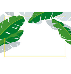 banana leaves with line frame on white background vector image