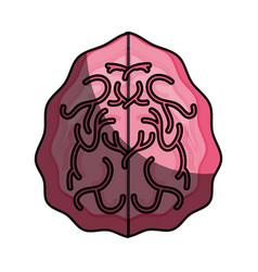 Human brain isolated vector