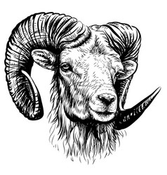 mountain sheep sketchy hand-drawn portrait vector image