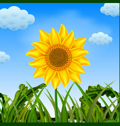 an awasome view with the big sunflower vector image