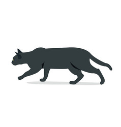black cat hunting with isolated white background vector image