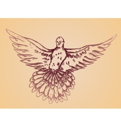 Dove Sketch2 vector