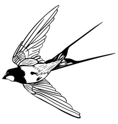 Silhouette flying swallows vector