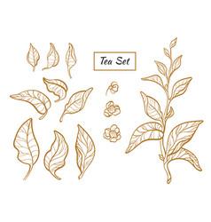 tea set gold vector image