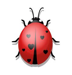 ladybug with hearts on white background vector image
