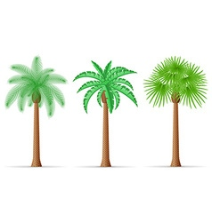 Palm tree 22 vector